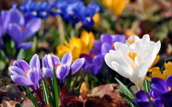 Афоризмы о весне