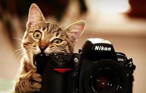 Статусы про фотографов