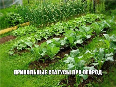 Прикольные статусы про огород