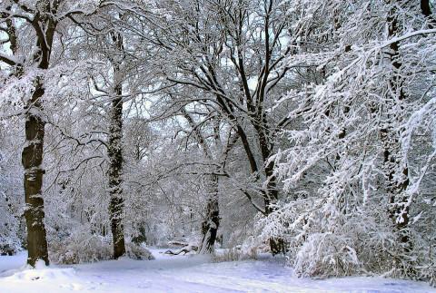 Статусы про снег