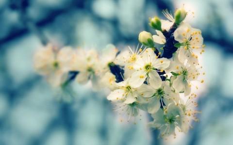 Прикольные статусы про весну